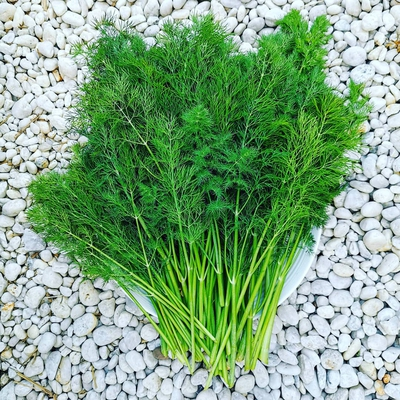 Dill Image1