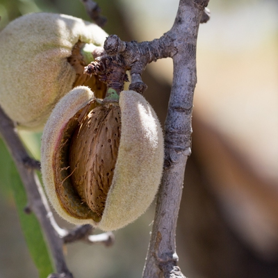 Almonds Image1